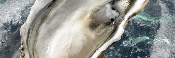 shell_oyster_opal_inspiration-58adb4bd5e54d8fd42b5c558ab4f303f.jpg
